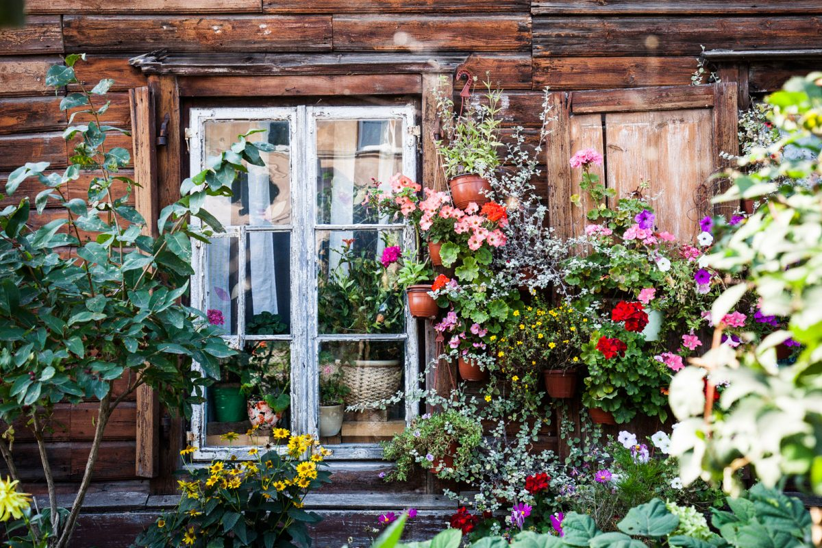 Janela de uma casa típica da cidade de Vilnius, com coloridas flores emoldurando a vista
